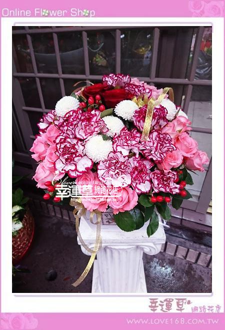 優質盆花C0501
