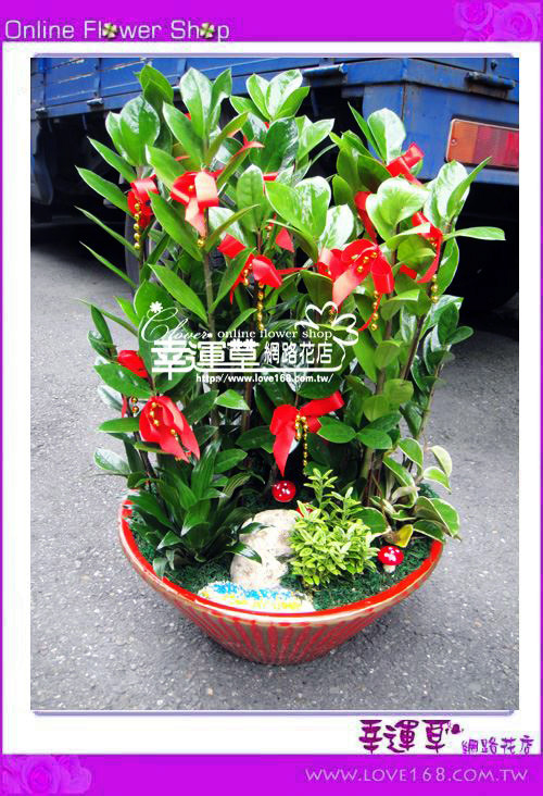 E78金錢樹盆栽