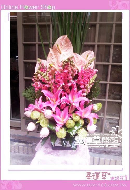 C13優質盆花