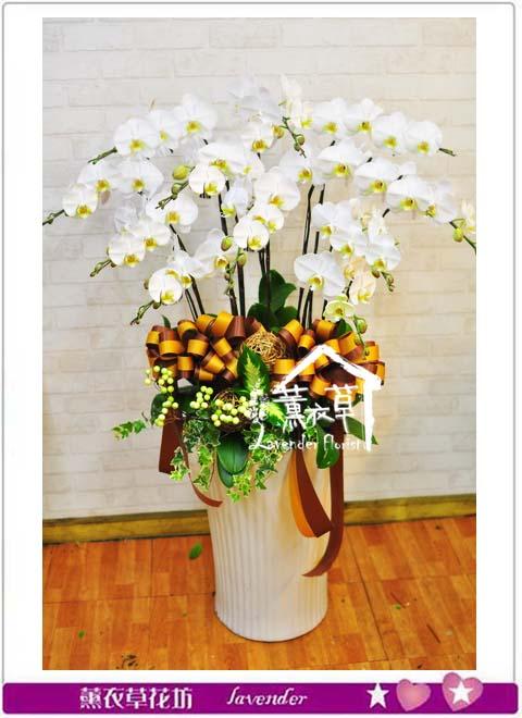 白色蝴蝶蘭禮盆 B110801