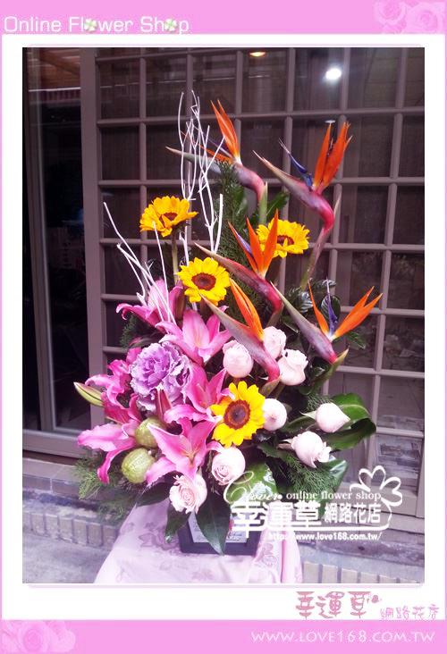 C49優質盆花