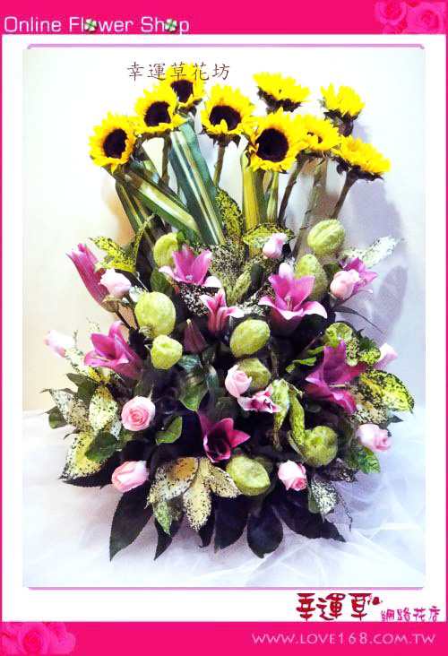 C21優質盆花
