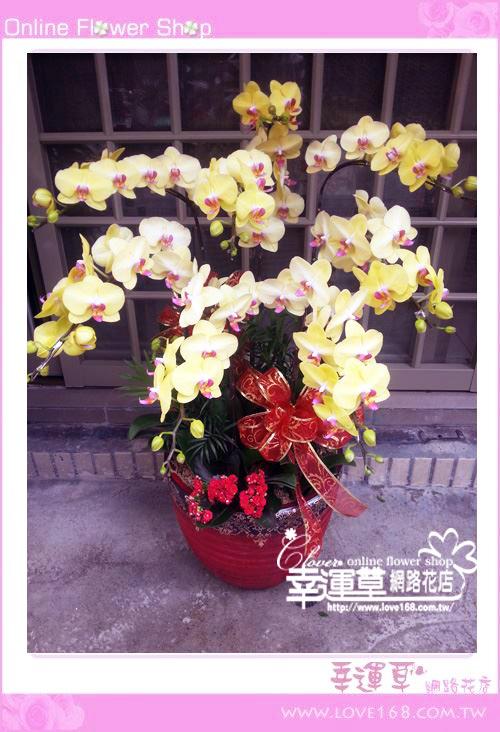 D015優質蘭花8株