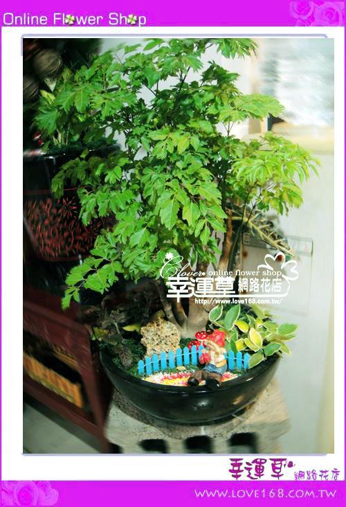E87富貴樹盆栽