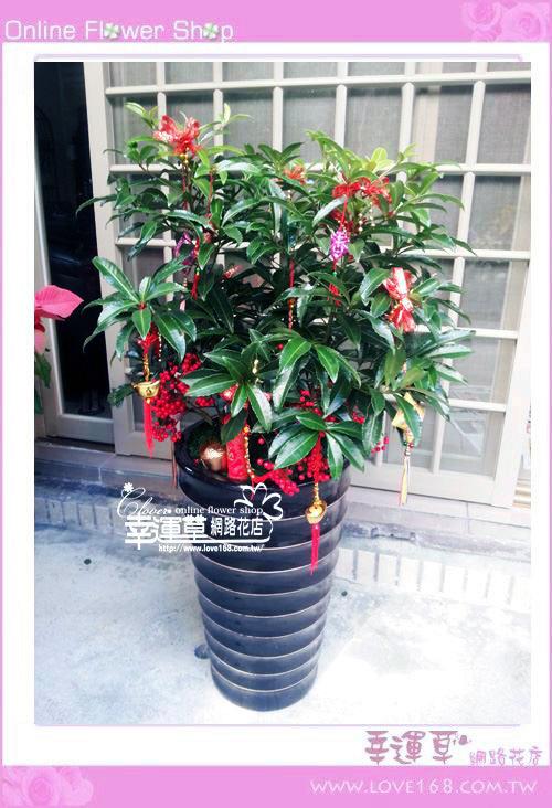 E93黃金萬兩盆栽