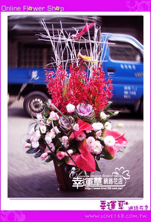 C51優質盆花