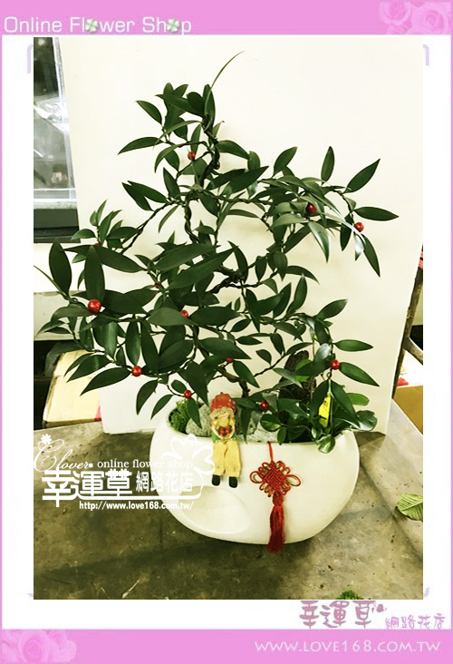 E1221竹柏組合盆栽
