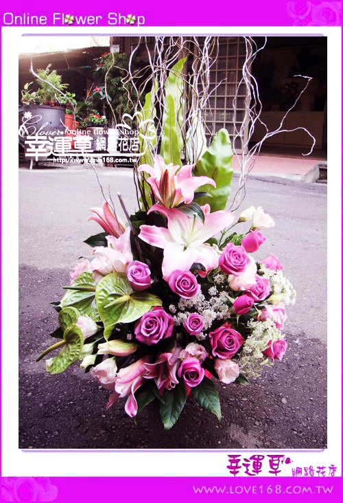 C47優質盆花