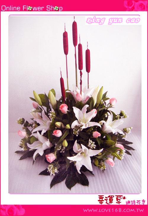 C12優質盆花