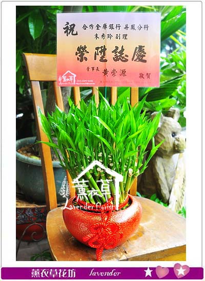 開運竹盆栽106060912