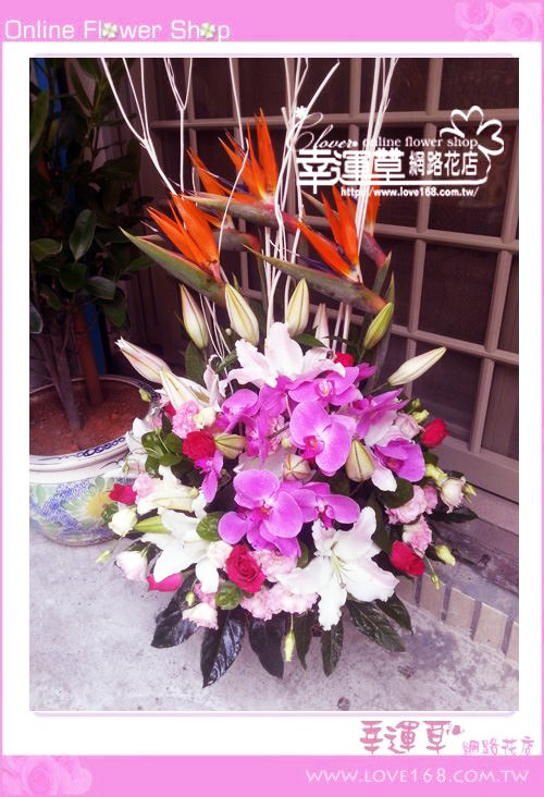 C33優質盆花