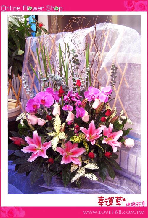 C25優質盆花