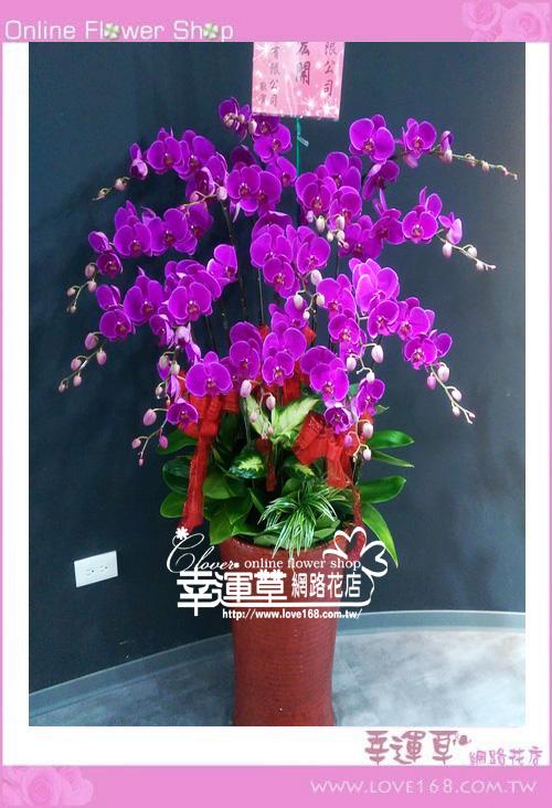 D088優質蘭花15株