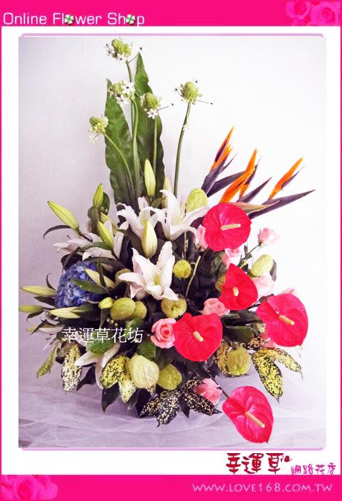C35優質盆花