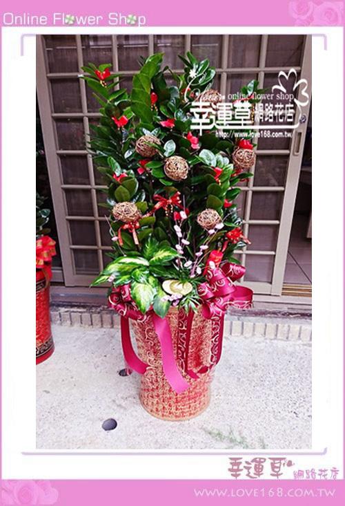 E0125金錢樹盆栽