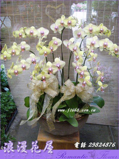 D61高雅蘭花