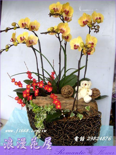D58造型蘭花
