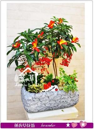 黃金萬兩盆栽-新年限定106010402