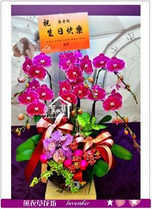 高雅蝴蝶蘭c123005