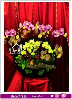 蝴蝶蘭禮盆c082818