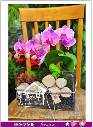 蝴蝶蘭設計 107011515