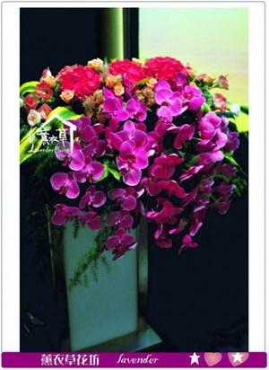 蝴蝶蘭盆花a072101