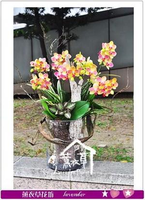 蝴蝶蘭 設計 106051205
