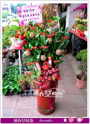 金錢樹盆栽y34185