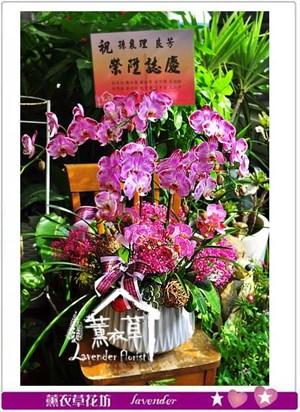 蝴蝶蘭禮盆 106090816