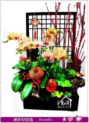 日式造景蝴蝶蘭~新品c012001
