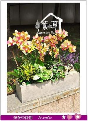 蝴蝶蘭設計106051505