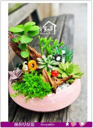 多肉植物設計b031716