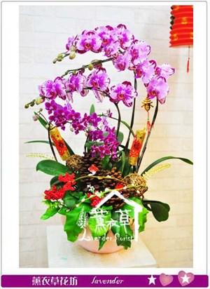 蝴蝶蘭 設計10601105