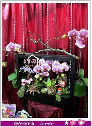 蝴蝶蘭設計c050818