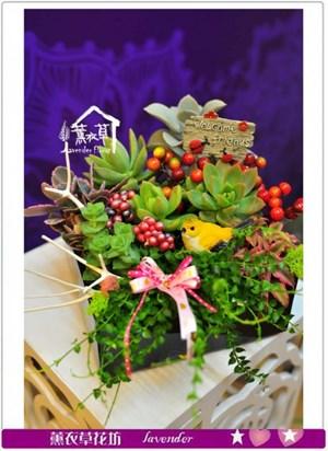 多肉植物設計a062127