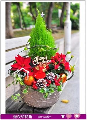 聖誕節盆栽設計A120126