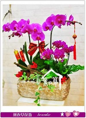 蝴蝶蘭設計106010905