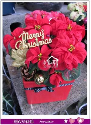 聖誕紅設計1組~2盆b122308