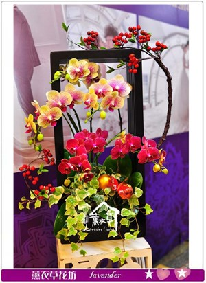 蝴蝶蘭設計款a111606