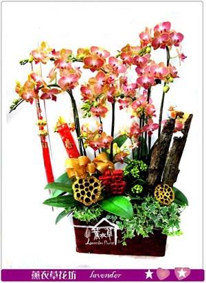 迷您蘭花設計~多苞式品種c012312
