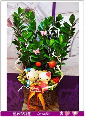 凱蒂貓盆栽c122218