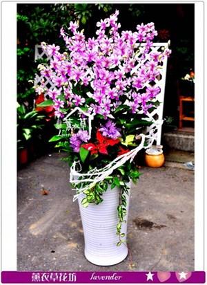 石斛蘭蘭花設計~c102402