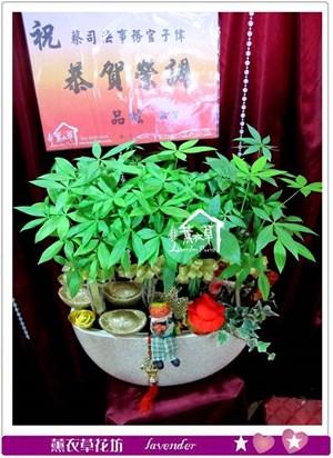 發財樹盆栽c010111