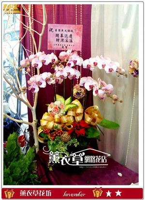 高雅蝴蝶蘭5-6 朱 y32939