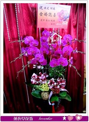 高雅蝴蝶蘭8朱C022516