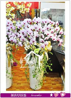 大型蝴蝶蘭設計 一盆 106042901