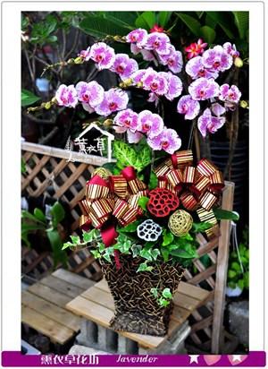 高雅蝴蝶蘭c090409