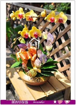 高雅蘭花c090106