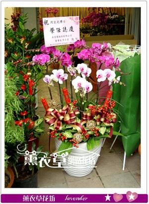高雅蝴蝶蘭y9616