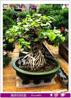 黃瑾樹 107012905